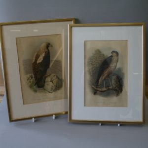 Victorian prints depicting Birds of Prey/williamsantiques